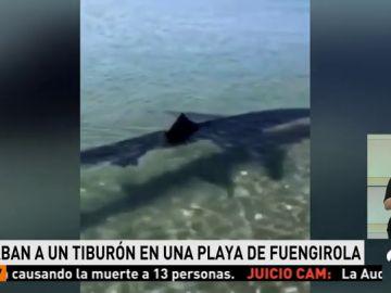 Graban a un tiburón en Fuengirola