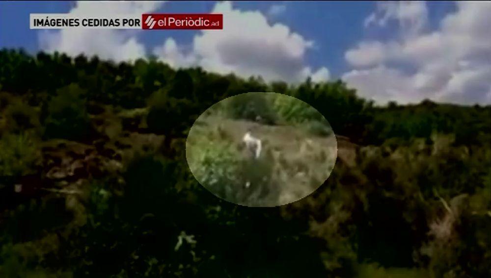 Mueren dos personas en un accidente de ultraligero en La Seu d'Urgell (Lleida)