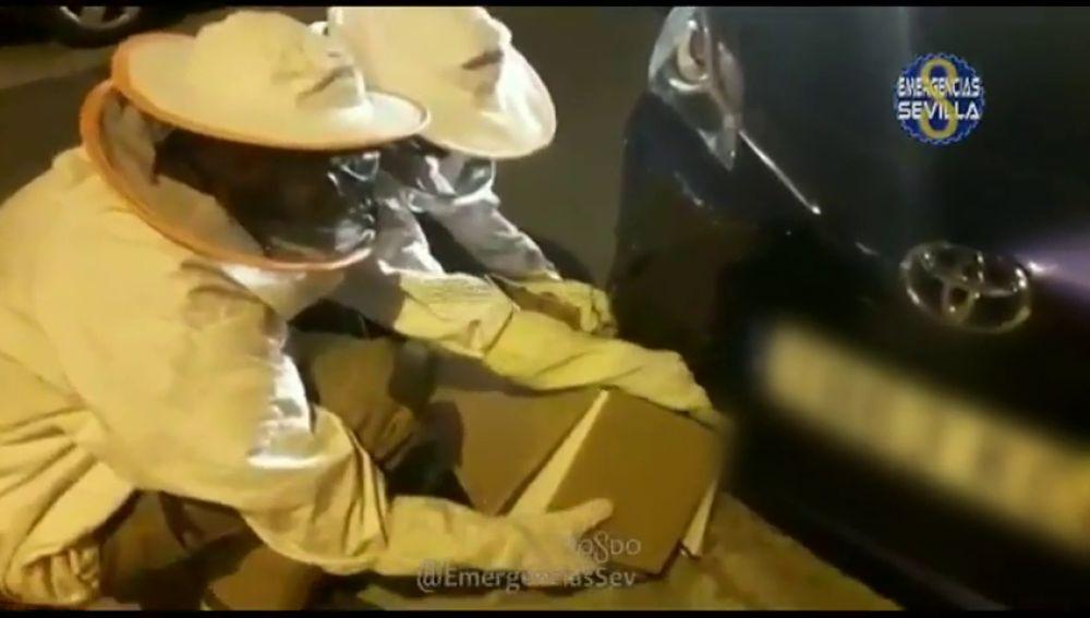 Bomberos retiran un enjambre de abejas de un coche