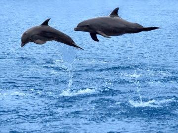 Delfines en libertad, ¿personas no humanas?