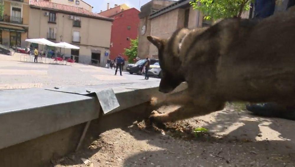 Perros contra la droga en el barrio de Lavapies