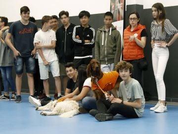 La Fundación Affinity y la Escuela Lleó XIII de Barcelona han puesto en marcha una terapia con perros