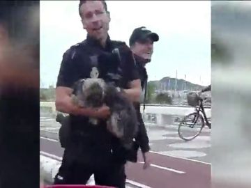 Agentes de policía evitan que un perro fuera atropellado en Las Palmas de Gran Canaria