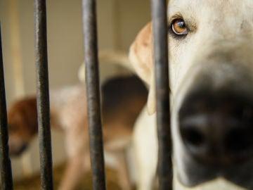 Imagen de un perro en una perrera