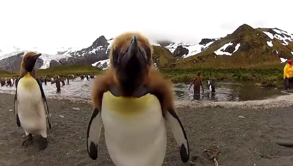 Las imitaciones de animales más virales