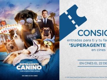 Concurso de 'Superagente canino'