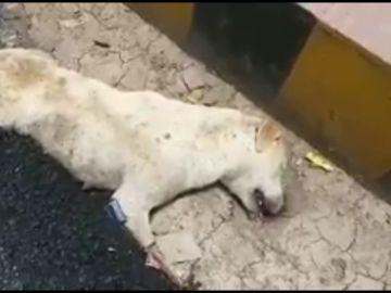 El perro atrapado por el alquitrán