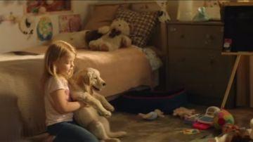 Campaña contra el abandono animal