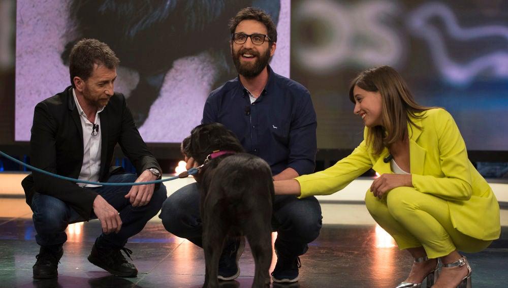 """""""Uno de los perros más auténticos que ha pasado por 'El Hormiguero 3.0'"""" busca un hogar en el que quedarse para siempre, ¿te gustaría adoptar a Moro?"""