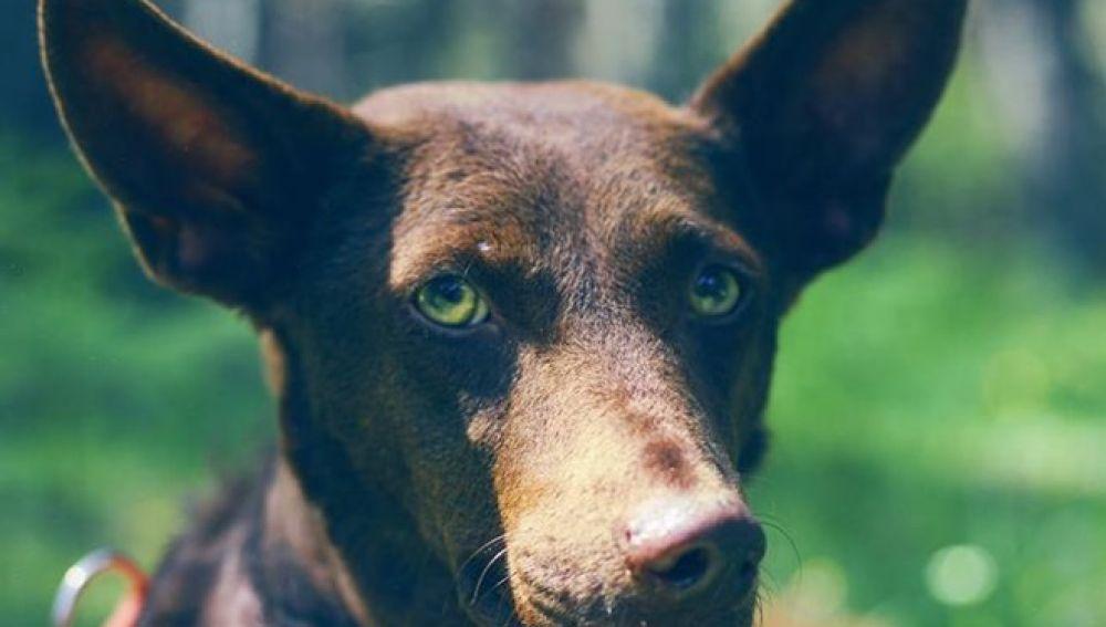 Pepita Banana, la perra abandonada en un cementerio