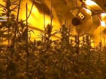 La Guardia Civil localiza un cultivo indoor con más de 1900 plantas de marihuana