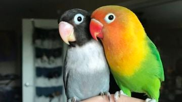 Kiwi y Siouxsie