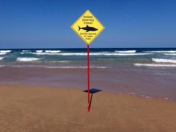 Peligro por la presencia de tiburones en una playa