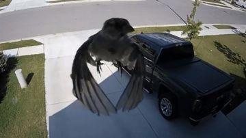 Pájaro flotando