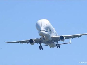 """El nuevo carguero """"Airbus Beluga XL"""" realiza su primer vuelo"""
