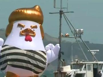 El globo en forma de gallina contra Trump vuela por la costa de San Francisco