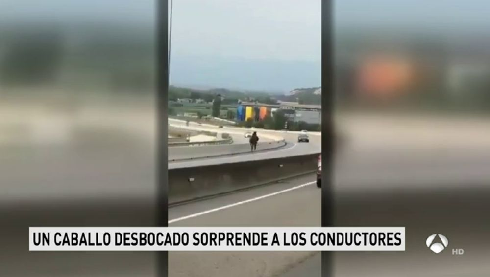 Un caballo trotando sin control por la C-17 en Barcelona provoca varios accidentes con tres heridos leves