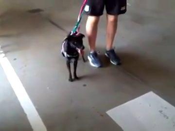 Encontrada la perrita perdida en el Aeropuerto de Barajas