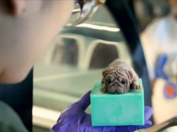 Preparan los primeros helados con forma de perrito en Taiwán