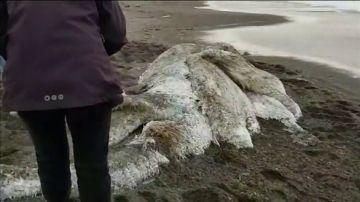 Aparece un mostruo peludo en una playa en Rusia