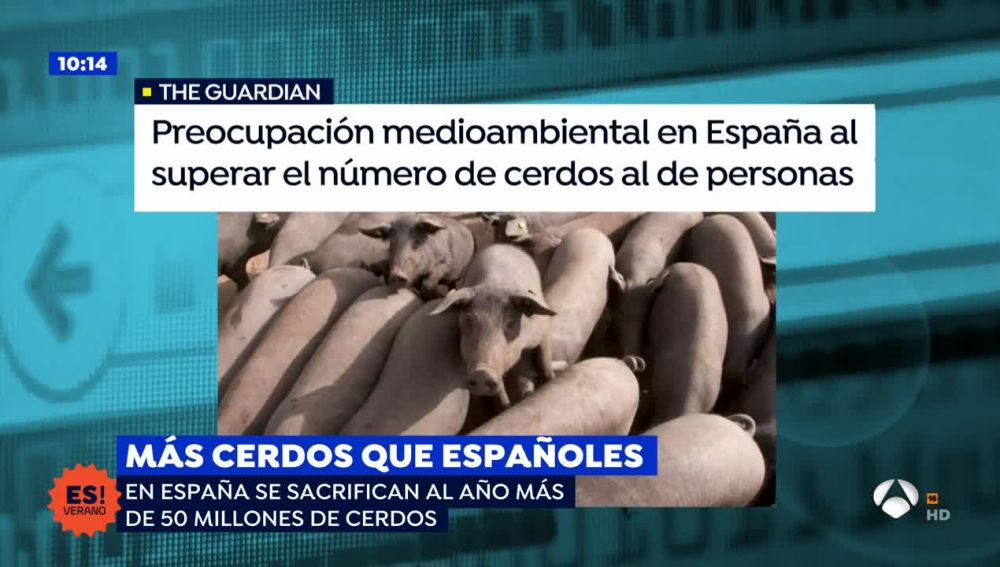 Un artículo británico levanta la polémica sobre los cerdos en España