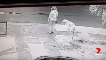 No recoge la caca de su perro