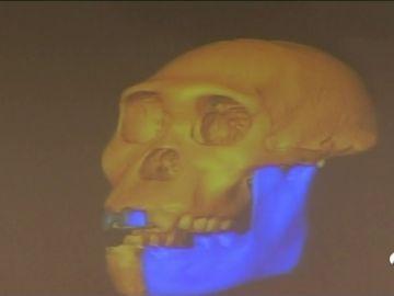 neandertla