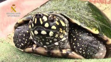 Tortuga (Archivo)