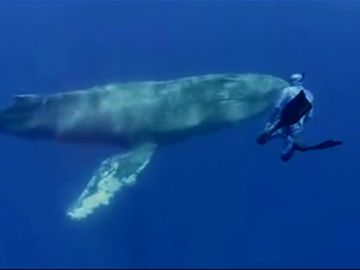 Un fotógrafo capta una ballena yubarta en Tenerife