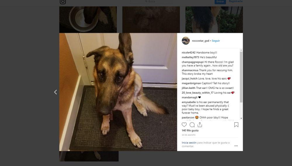 Este perro fue abandonado porque su familia iba a tener un bebé