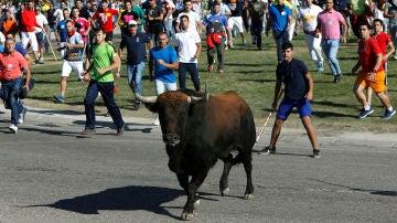 Imagen del festejo del Toro de la Vega, en Tordesillas