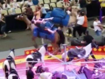 Siete personas resultan heridas tras un accidente con un camello en un circo