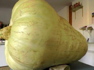 Un agricultor cultiva una calabaza gigante de 117 kilos
