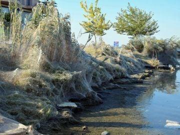 La telaraña en la costa de Aitoliko