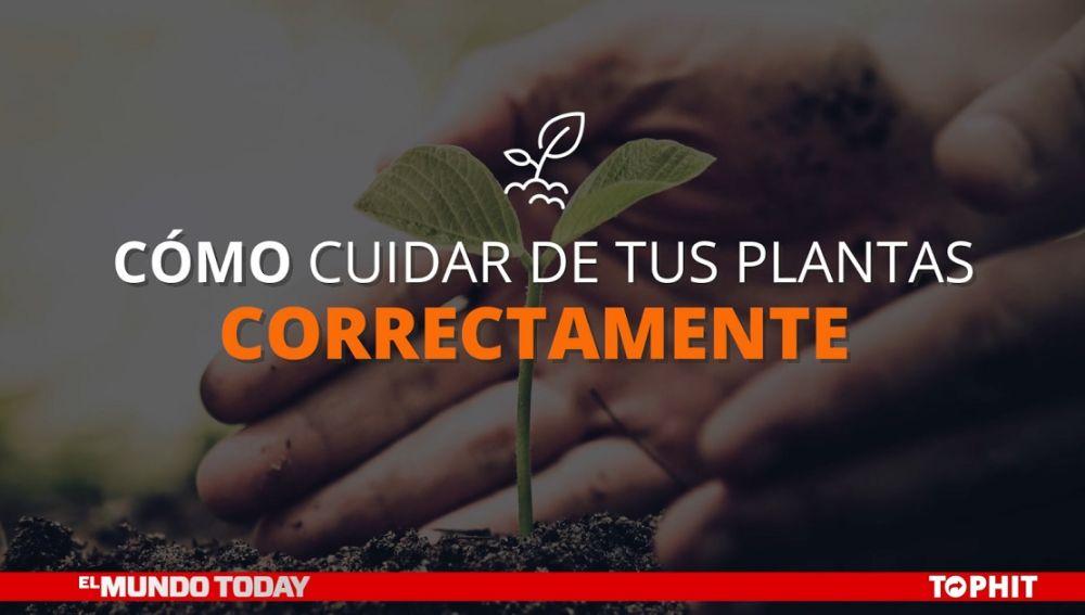 Cómo cuidar de tus plantas correctamente