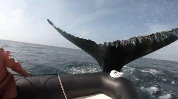 El enorme susto de unos turistas cuando una ballena golpea un bote inflable en Canadá