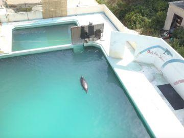 El delfín abandonado