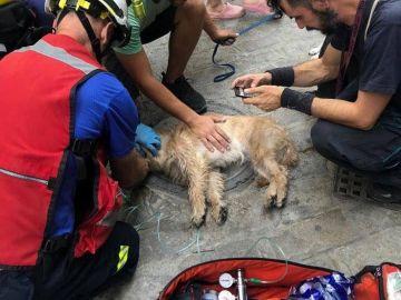 Los Bomberos de Sevilla reaniman a un perro