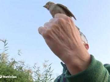 pájaro identificado