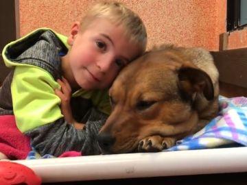 El niño junto a uno de los perros rescatados