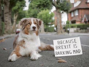 Centenares de perros y sus dueños se manifiestan en Londres para pedir otro referéndum del 'brexit'