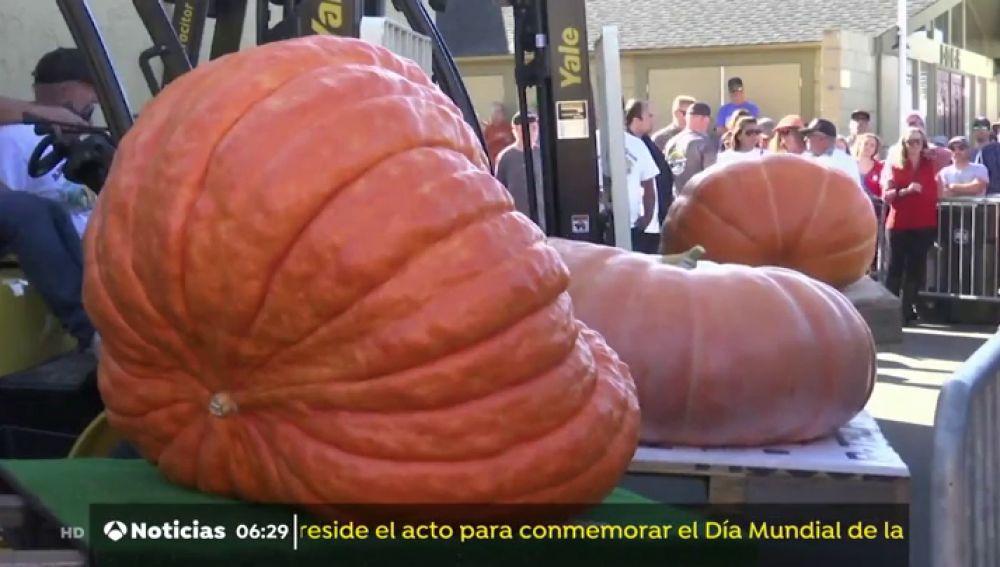 Una calabaza de mil kilos gana un popular concurso en California