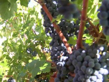 Dos hectáreas de viñedo en Madrid para estudiantes de FP