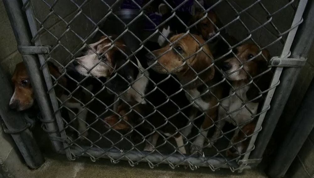 Rescatan a 70 perros encerrados en condiciones deplorables en Pensilvania