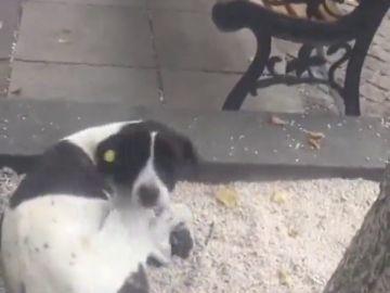 """""""Jorge, ¿eres tú?"""", el emotivo reencuentro entre un hombre y su perro tres años después de haber desaparecido"""
