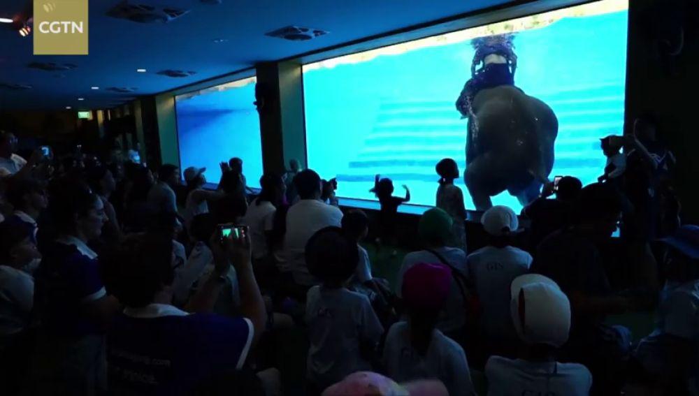 En Tailandia denuncian el uso de elefantes para espectáculos acuáticos