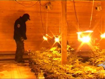 La policía rusa detiene a tres hombres sospechosos de instalar una granja de cannabis