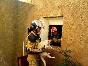 Rescate de un perro en Zaragoza