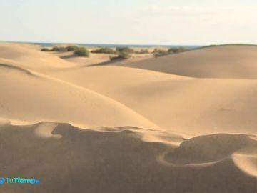 Nuevo proyecto para conservar las Dunas de Gran Canaria