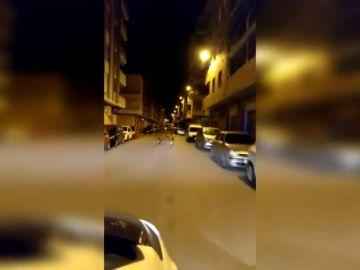 Un grupo de jabalíes pasean por las calles de Sagunto